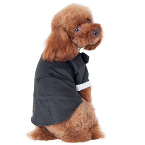 Prince Wedding Suit for dogs