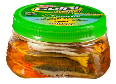 "Berkley Gulp Alive 3"" Shrimp Tub - TailwaterOutfitters"