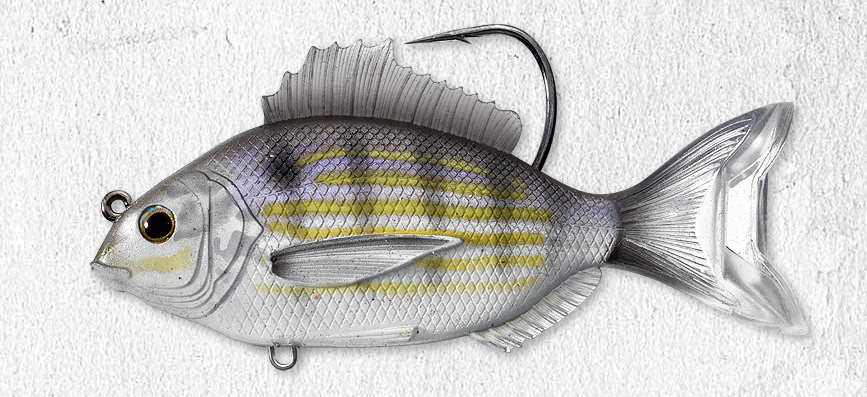 "Live Target Pinfish 3.5"" Swimbait - TailwaterOutfitters"