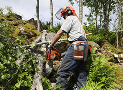 Chainsaw Safety - Training Network
