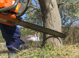 Chainsaw Accidents - The Consequences - Training Network