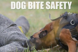 Dog Bite Prevention - Training Network