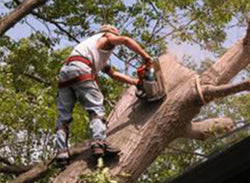Tree Trimming Safety - Training Network