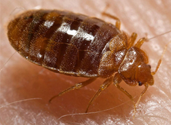 Bed Bugs: Facts And Prevention - Training Network