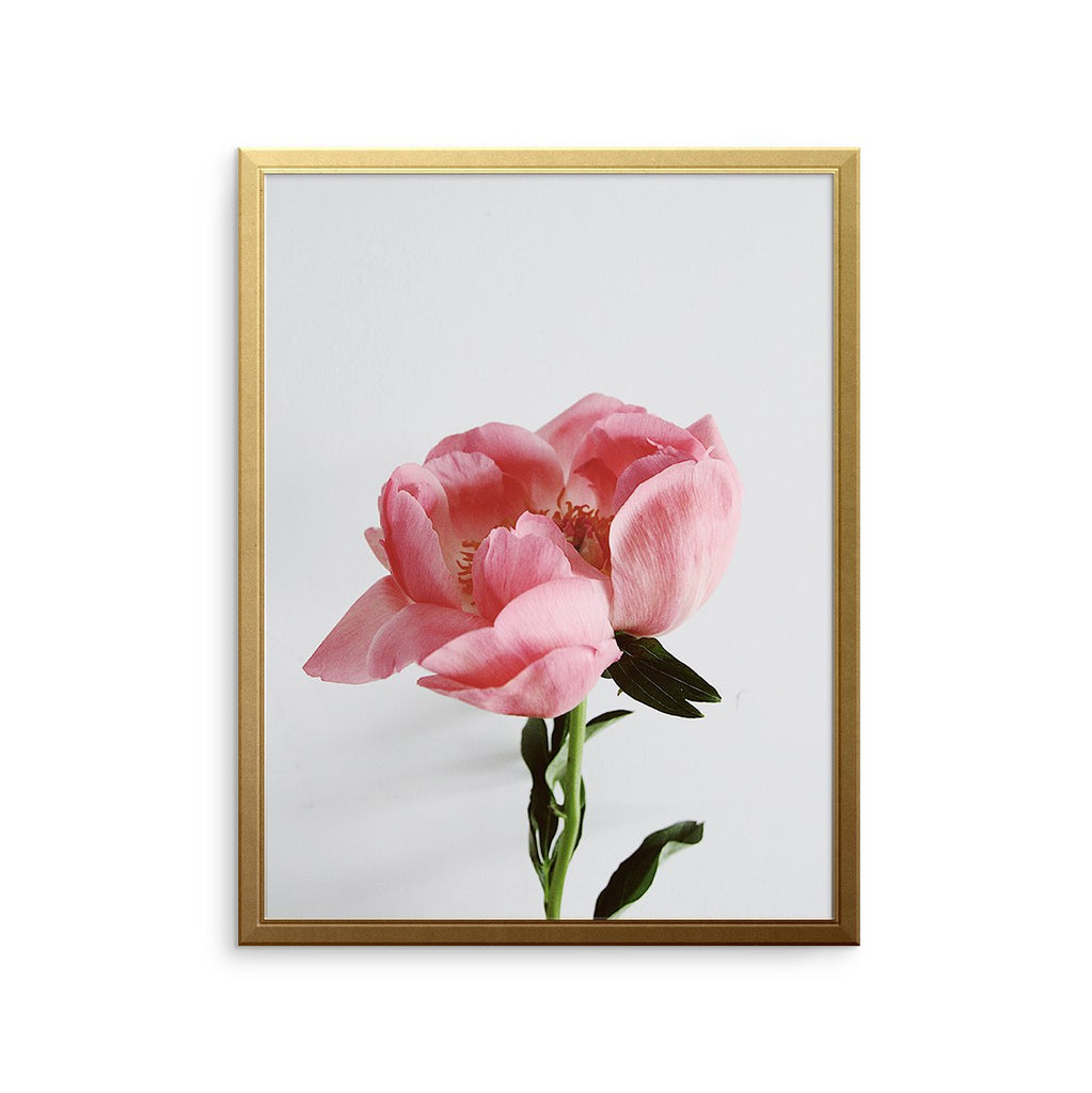 Peonies Stem Art Print Summer Collection Art Print Urbanwalls Urbanwalls