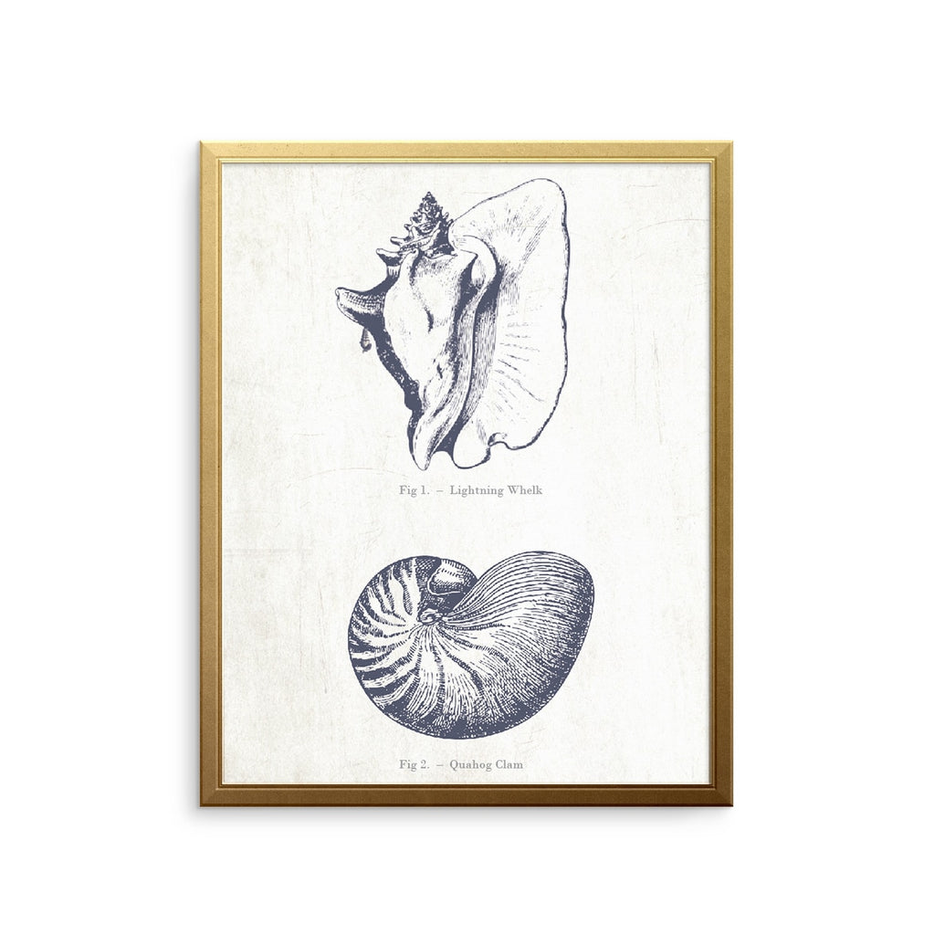Seashells Vintage Wall Art Print