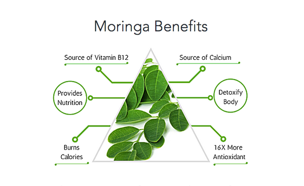 辣木的營養 Moringa Benefits