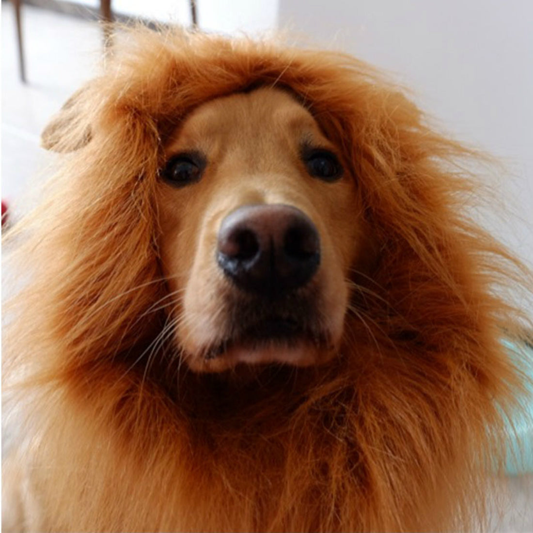 Pet Lion Mane Wig Hat for Dog Costume Halloween Christmas Party Dress Up Lion Mane Winter Warm Wig Cat Party Decoration With Ear