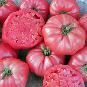 Heirloom big tomato brandywine pink-4 plants-May