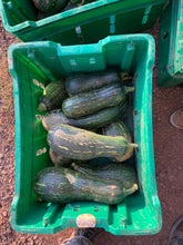 Load image into Gallery viewer, Winter squash green Miben 5lbs