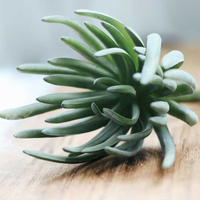 Artificial Grey Succulent