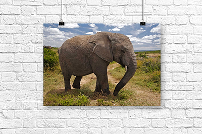 Acoustic Wall Art Canvas Wildlife