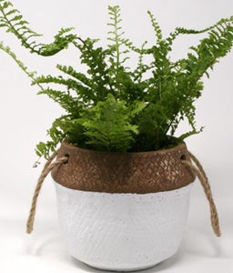 Basket Planter - Two Toned - Large