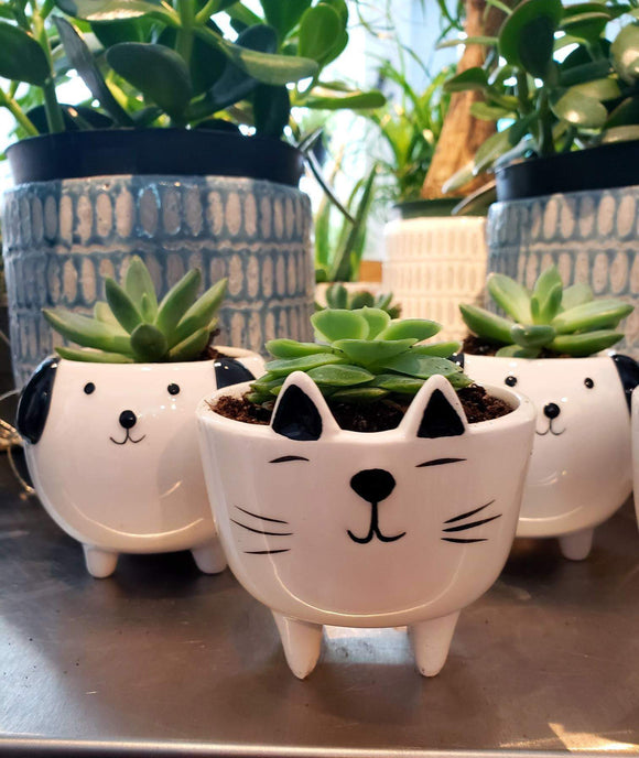 Cat on Legs Planter-3.5""