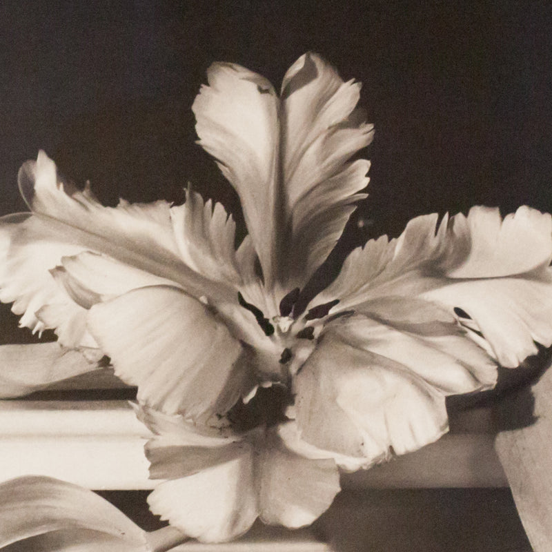 Horst P Horst photo flowers Tulips, Caviar20