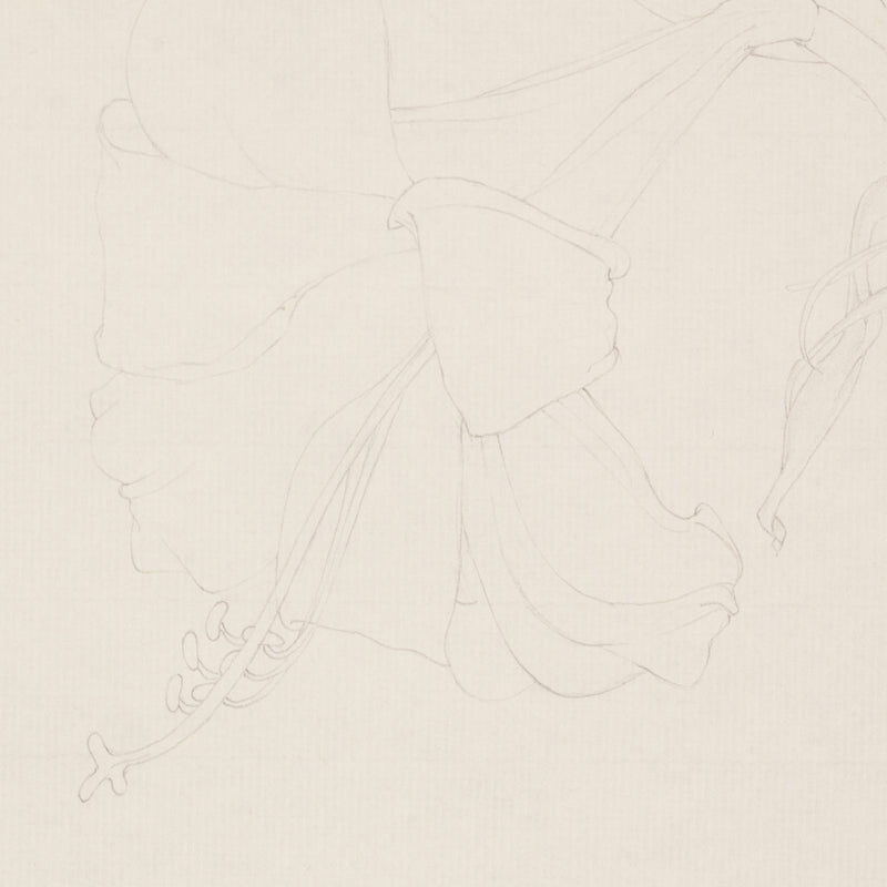 "MARY PRATT ""AMARYLLIS"" DRAWING, 1971"