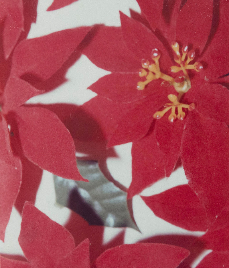 Andy Warhol Poinsettias Polaroid 1982 Caviar20
