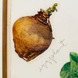 "JIM DINE ""VEGETABLES 3"" 1971"