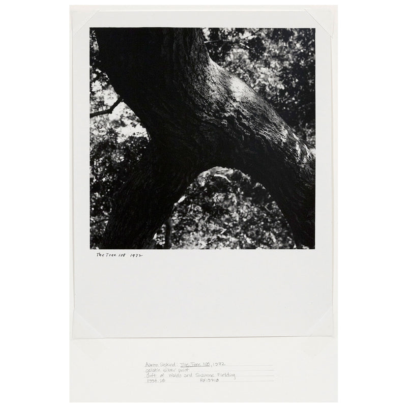 Caviar20 Aaron Siskind The Tree 108 photo
