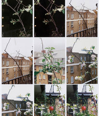 "WOLFGANG TILLMANS ""PROCESS (APPLE TREE)"", 2012"