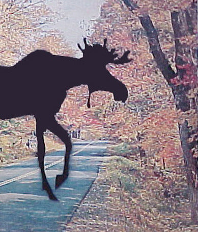 "CHARLES PACHTER ""MOOSE CROSSING"" 1999"
