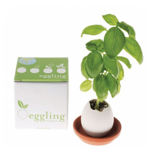 "Egg in a small ceramic dish, a large basil plant sprouting from inside of it. To the left, a small box reads ""eggling"""