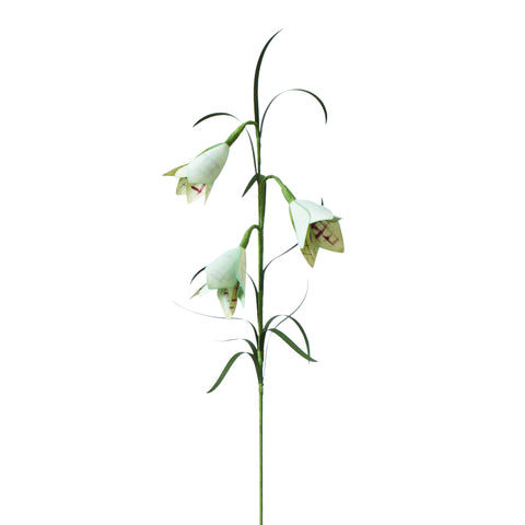 Against a white background, a photograph of a plaid paper Fritillaria Verticillata standing vertical with a green stem and  leaves.