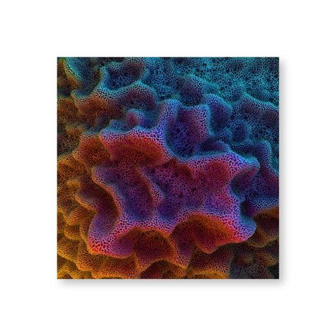 A poster shows microscopic views of the ridges of coral. The forms are in hues of pink, turquoise, yellow, and green.