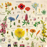 Close up of colorful botanical illustrations, include text identifying each flower