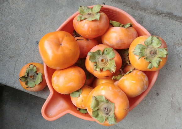 Fuyu Persimmons are Back!