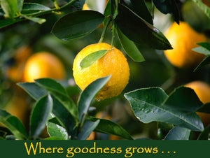 Beck Grove & La Vigne Organics Meyer Lemon