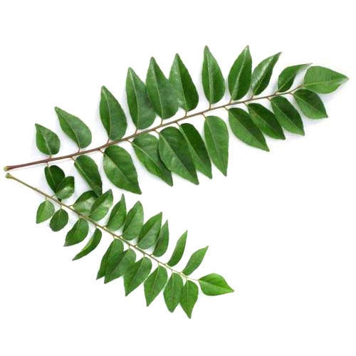 Curry Leaves, Organic and Biodynamic (Fresh Frozen)