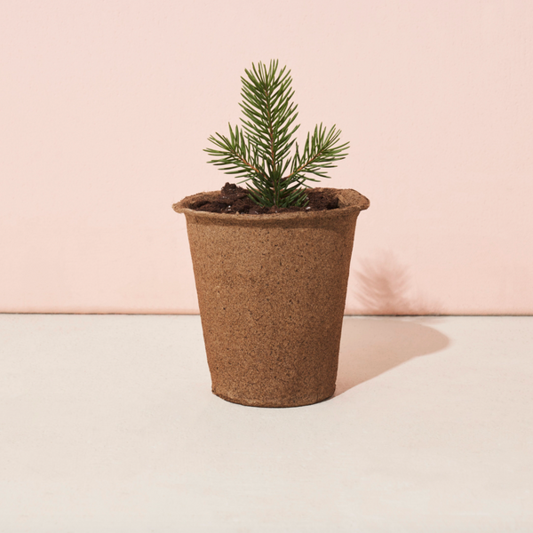The One-For-One Tree Kit (Blue Spruce)