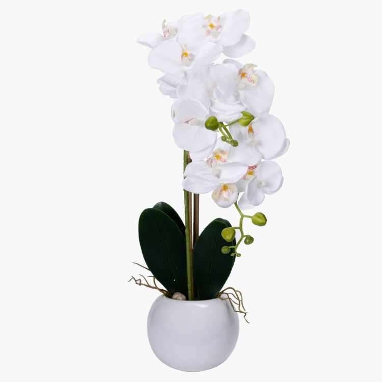 Pot with Orchid