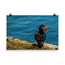 Load image into Gallery viewer, Summer Puffin - Photo paper poster