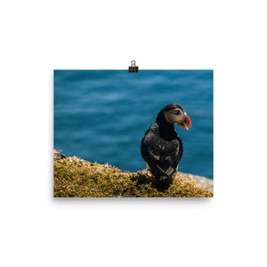 Summer Puffin - Photo paper poster