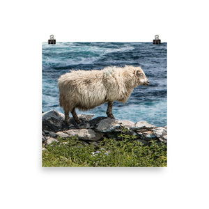 Cliff Sheep - Photo paper poster
