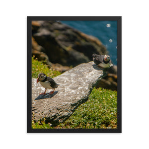 Puffin Couple - Framed photo paper poster
