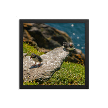 Load image into Gallery viewer, Puffin Couple - Framed photo paper poster