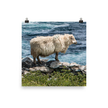 Load image into Gallery viewer, Cliff Sheep - Photo paper poster