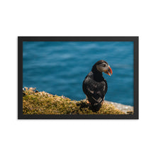 Load image into Gallery viewer, Summer Puffin - Framed photo paper poster