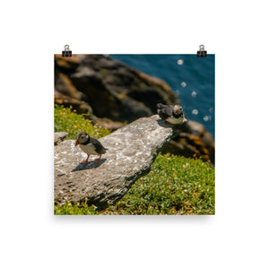 Puffin Couple  - Photo paper poster