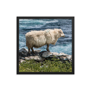 Cliff Sheep - Framed photo paper poster