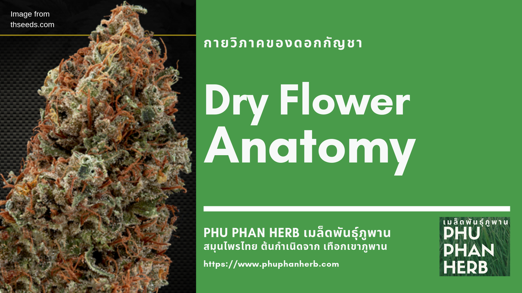 Dry Flower Anatomy