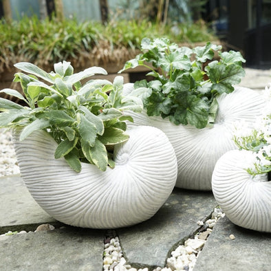 Ceramic Shell Planter in from Oriana B. www.orianab.com