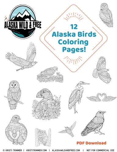 Color: Alaska Bird Coloring Pages