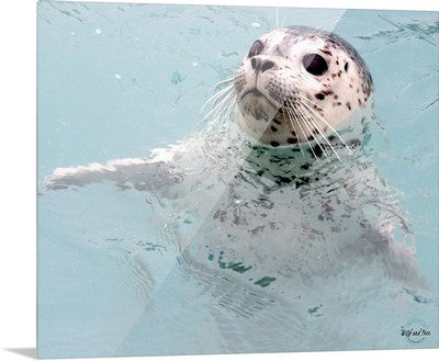 Metal - Harbor Seal