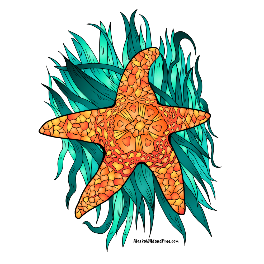 Starfish - Orange Starfish Sticker