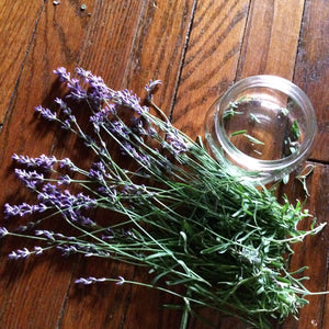 Whole Plant Tinctures: Lavender