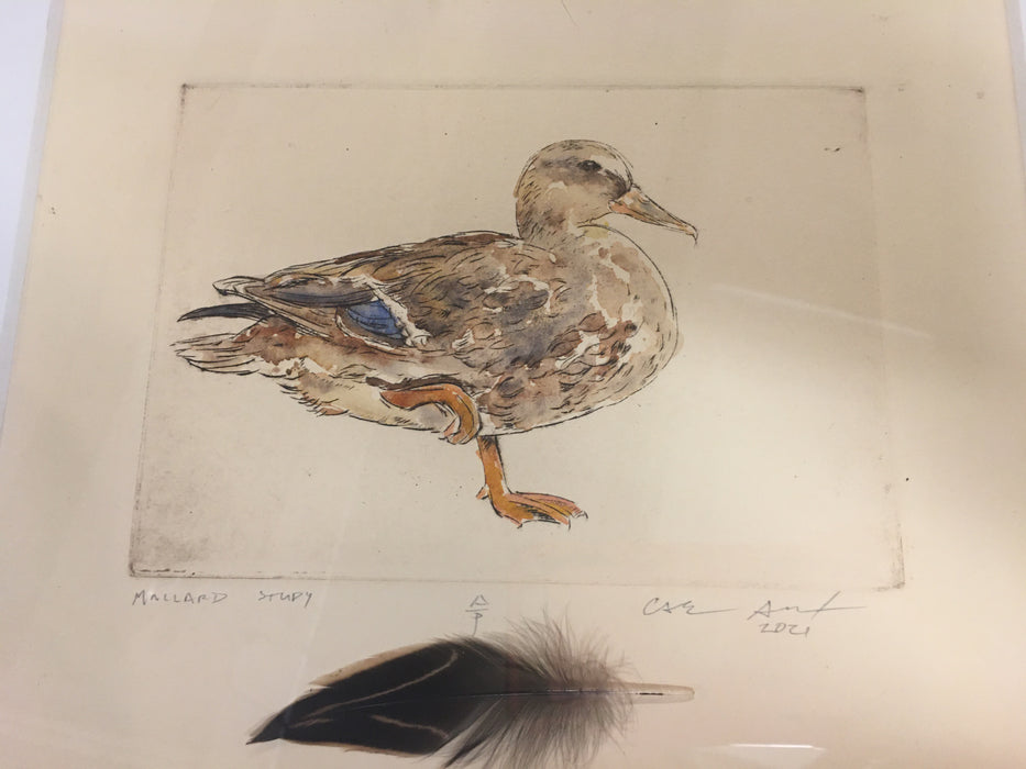 Female Mallard Duck Engraving_Watercolor